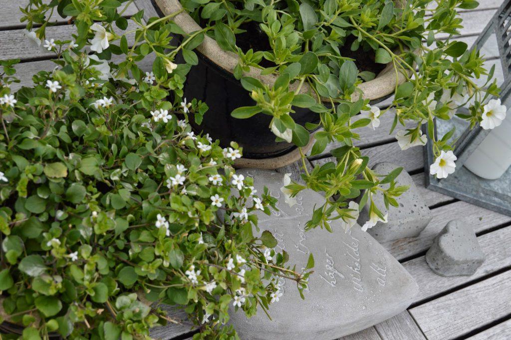 Sommerblomster i hvitt og lime er fiffig - Forskjellige blomster, men dog hvite