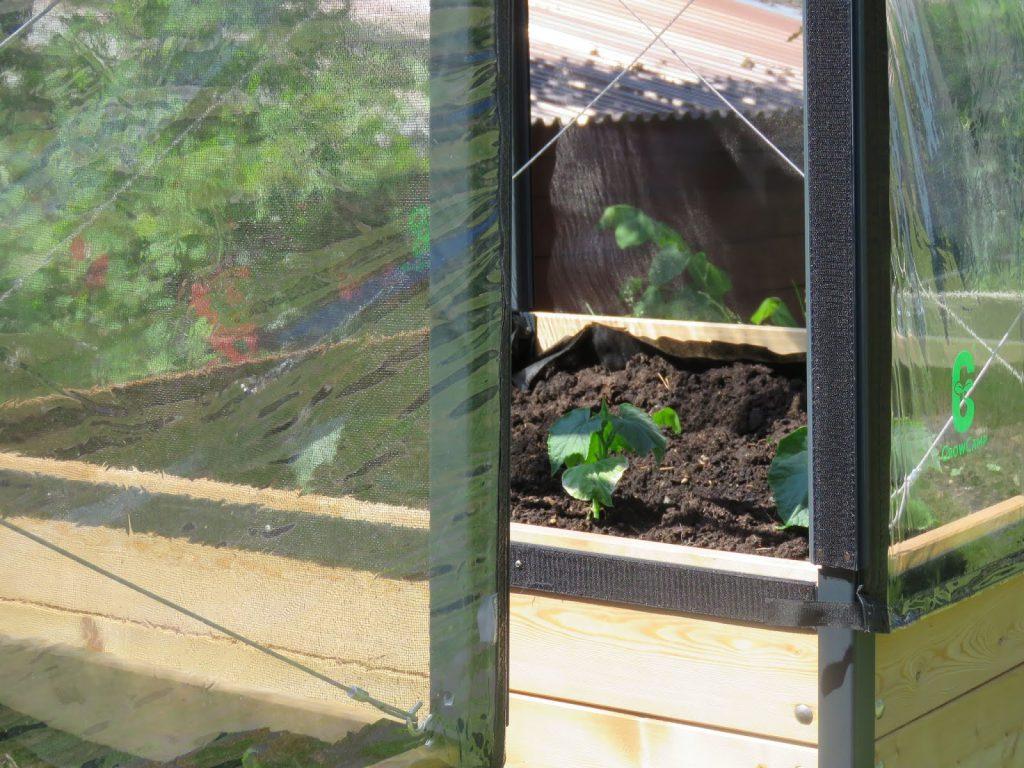 Her får du en titt inn i et Growcamp drivhus med mine akurkplanter som allerede har kommet seg godt i løpet av noen få dager.