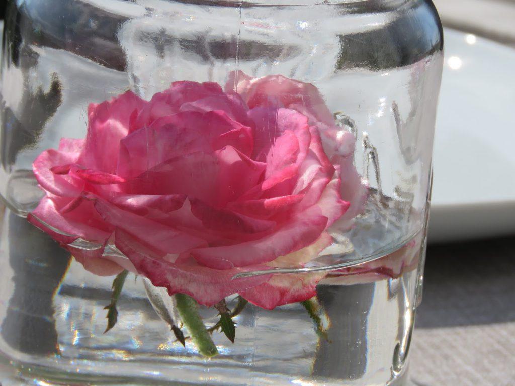 Roser i Norgesglass på hytteverandaen