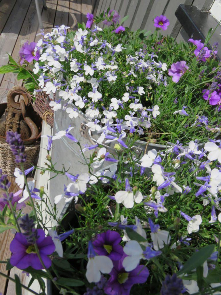 Nærbilde av sommerblomster på hytteverandaen