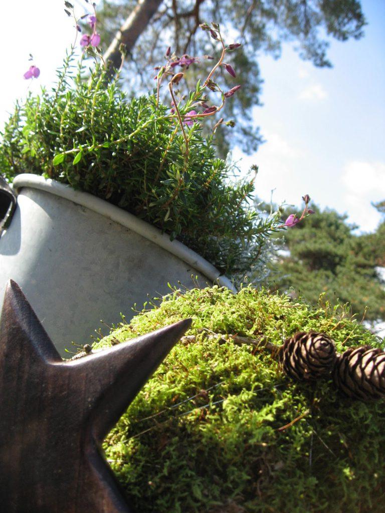 Inspirasjon til høstkrukker - del 1 Nærbilde. Furulunden