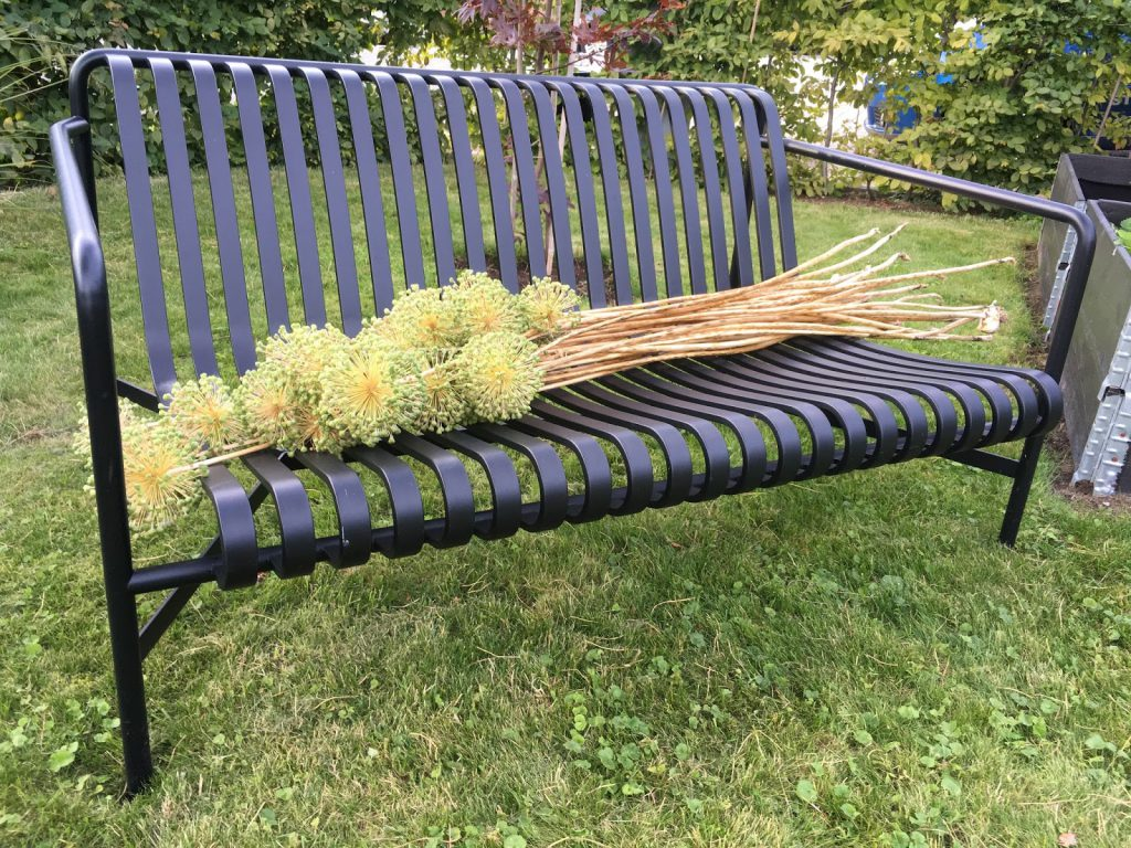 Foto 3: Frøsåing av Allium. Avblomstrete Allium. Furulunden