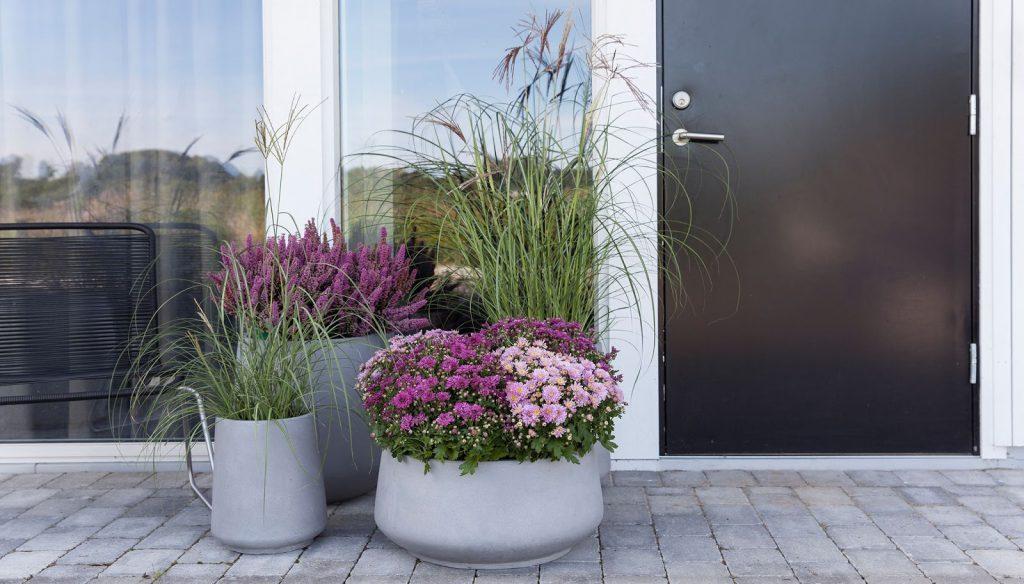 Inspirasjon til høstplanter i krukker - del 4 Furulunden. Flere krukkeplanter utenfor inngangsdøren.