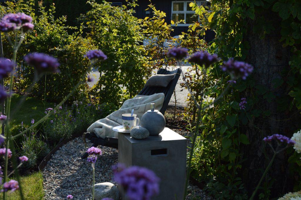 Kjempeverbena - Verbena bonariensis - florlett tilskudd nesten hvor som helst i hagen eller i en krukke