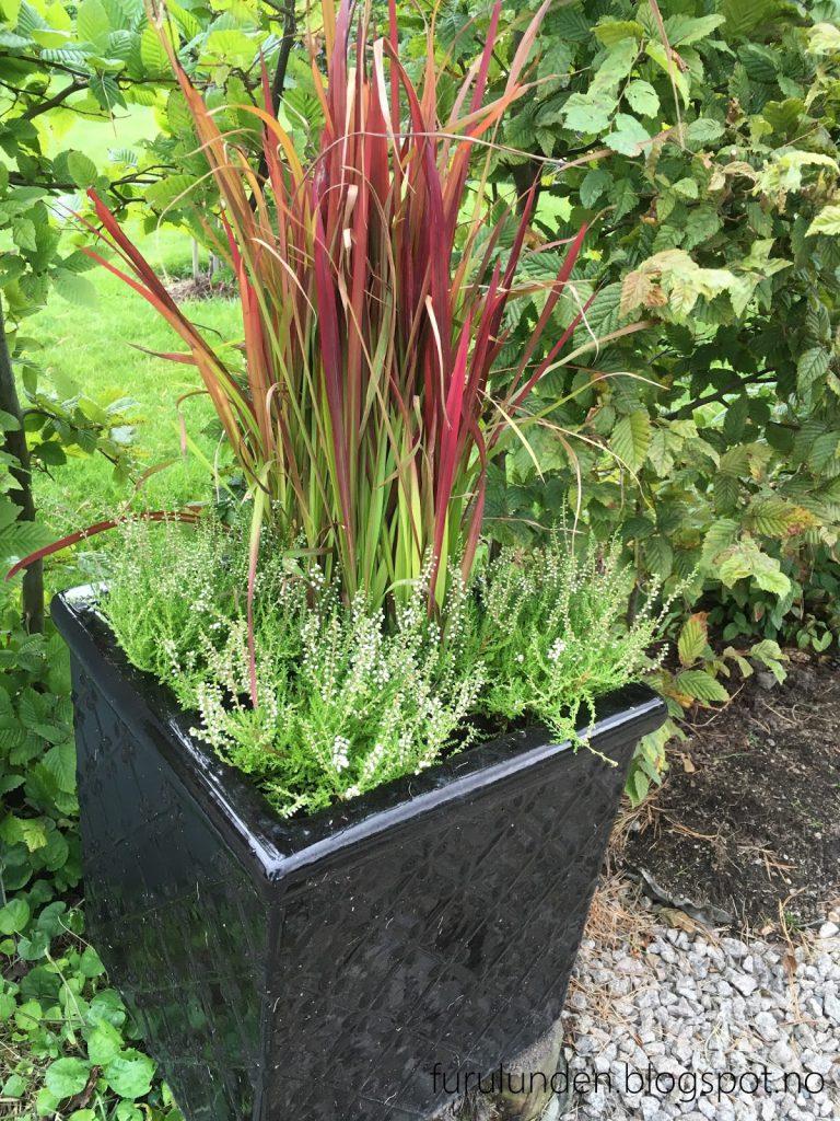 Inspirasjon til høstplanter i krukker - del 5. Samplantingen ved postkassen, på vei inn til Furulunden