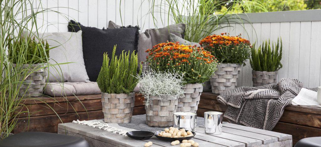 Inspirasjon til høstplanter i krukker - del 3. Furulunden. Stilleben av høstplanter på et bord i en sittegruppe.