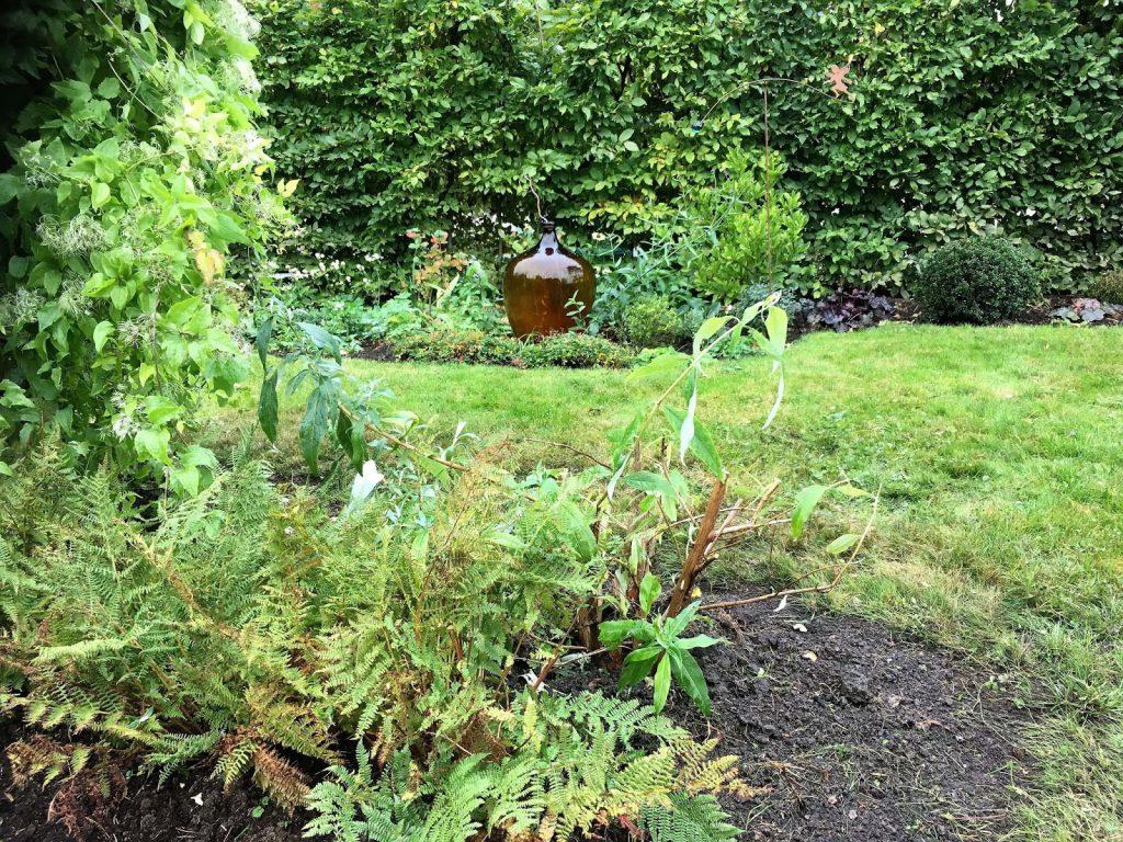 Høsten er en fin tid for å plante - flytte busker og stauder - Sommerfuglbusken er flyttet