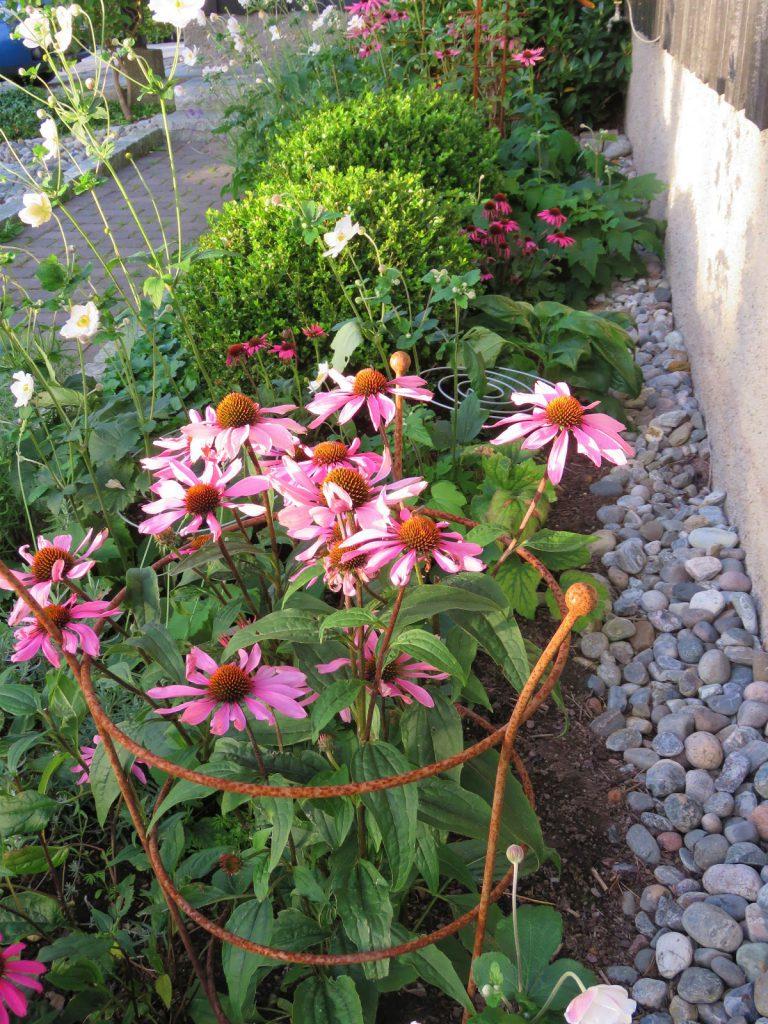 Høstanemoner og purpursolhatt i høstbedet