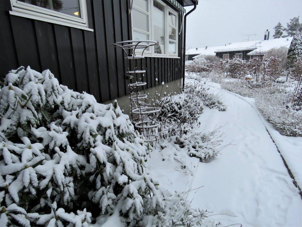 Hagen i vinterskrud