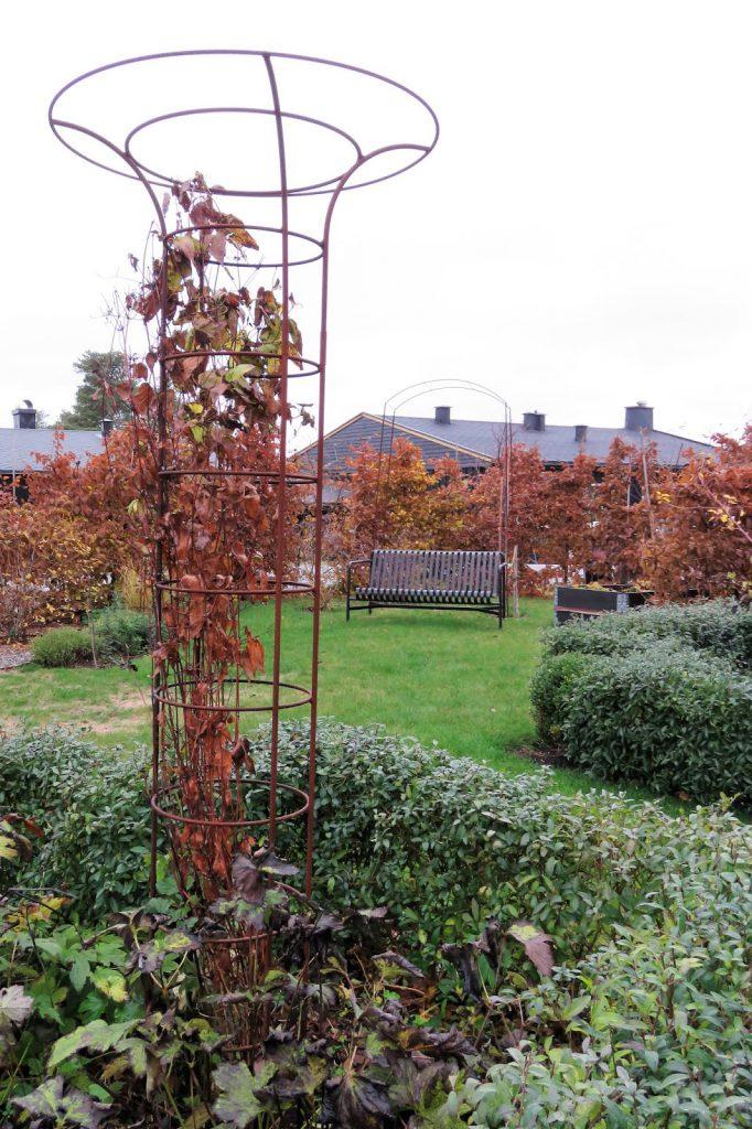 Hagen min kler seg i rust. Klatrestaiv i rektngulært bed m.m. Furulunden IMG_0015