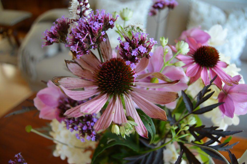 Herlig hvit og rosa purpursolhatt - Echinacea egner seg godt til blomstervasen