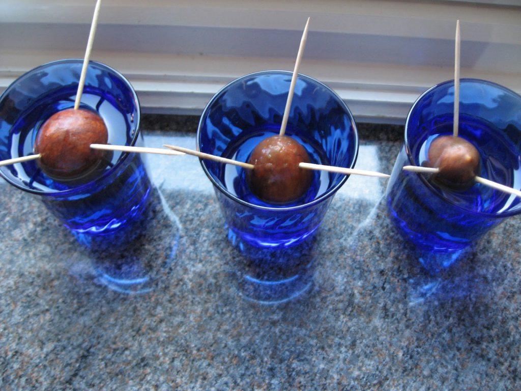 Lag ditt eget avokadotre - Avokadosteiner satt til spiring