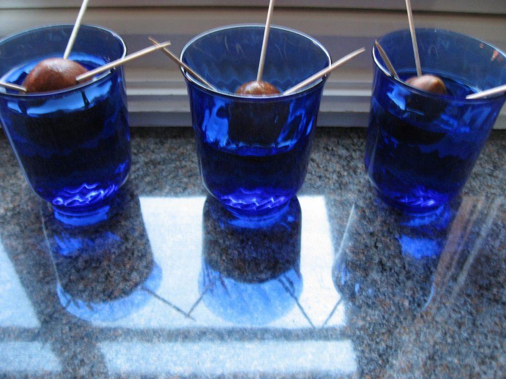 Lag ditt eget avokadotre - Her står avokadosteiner lyst i et vindu