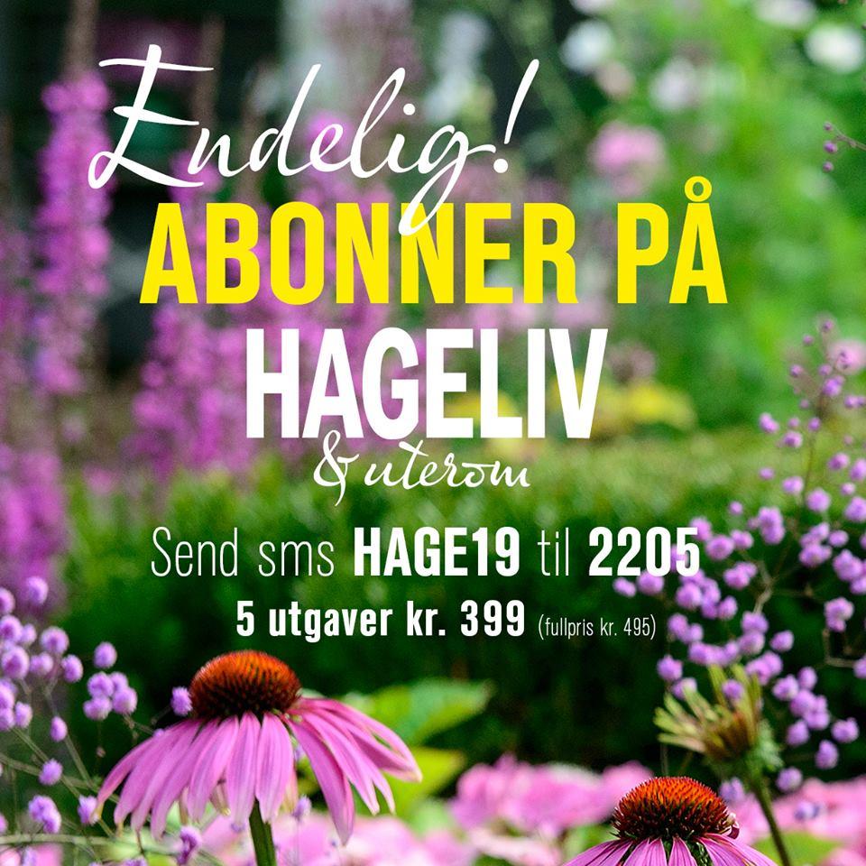 Du kan få nytt fra Furulunden rett i e-postkassen din - slik kan du abonnere på Hagelivoguterom