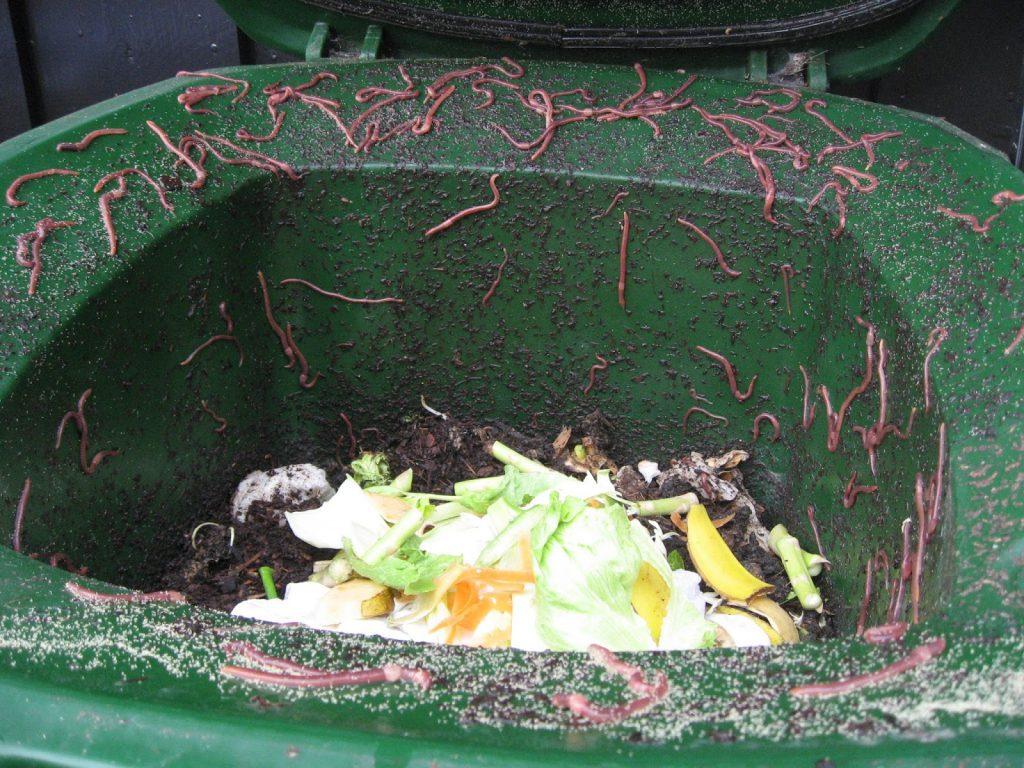 Varmkompost, det er hagens gull det - Kompostmarken koser seg i kompostbingen