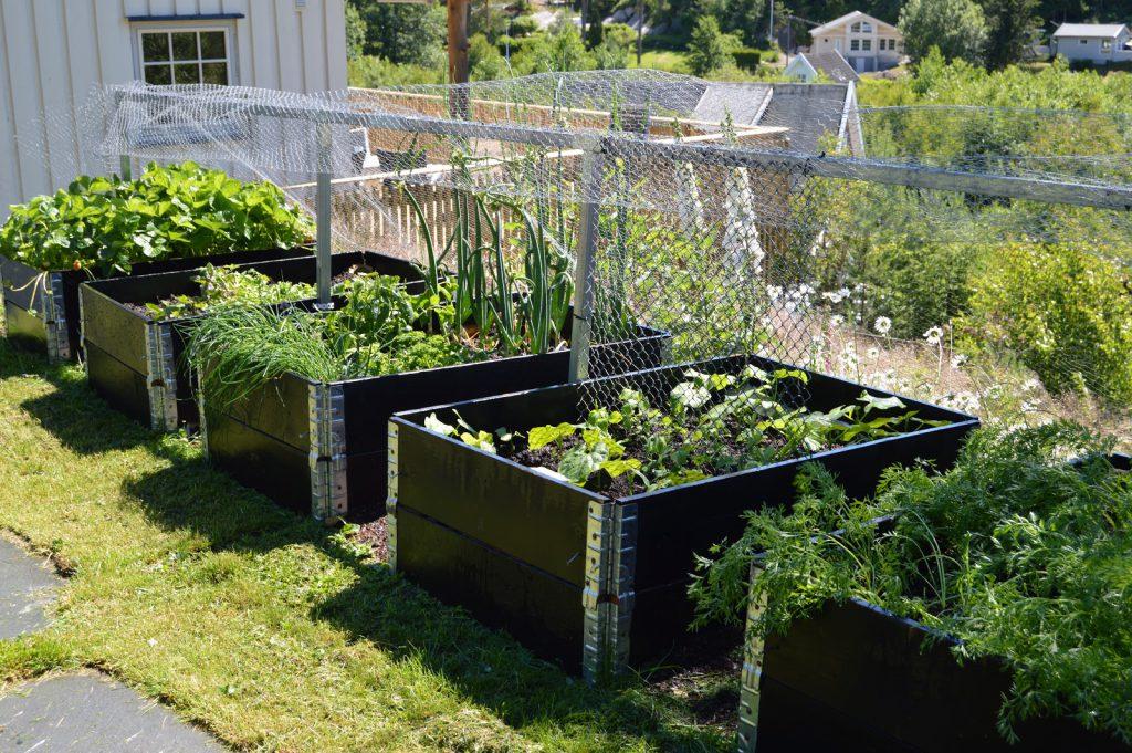 7 grunnleggende steg for å dyrke dine egne grønnsaker. Pallekarmer med urter og grønnsaker - Hyttehagen