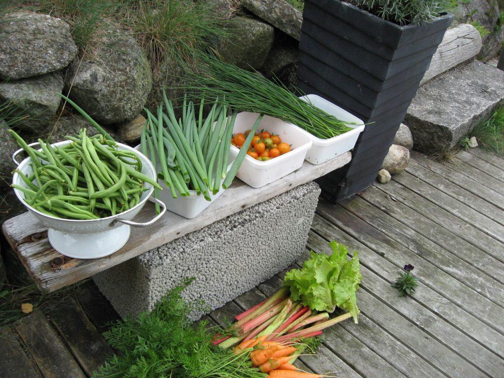 Dyrk grønnsaker økologisk - kortreist og sunt. Økologiske grønnsaker er høstet