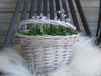 Tips til blå vårblomster i krukker