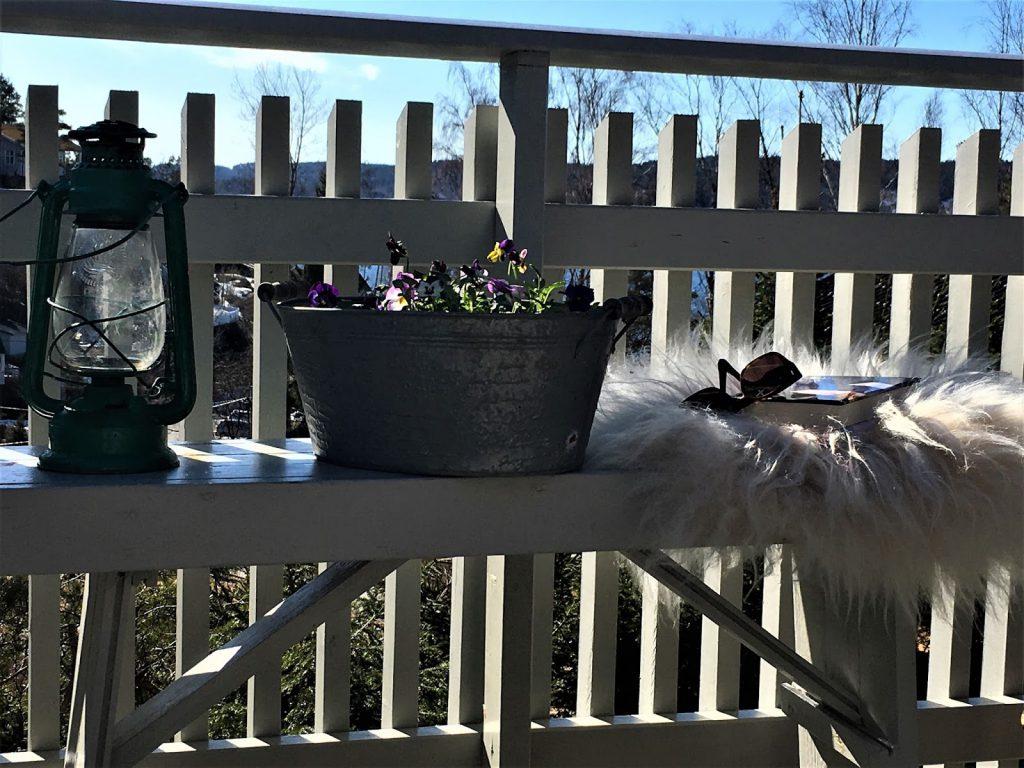 Vårblomster i krukker har ankommet hytta - Stilleben med vårblomster på hytta - mot utsikten