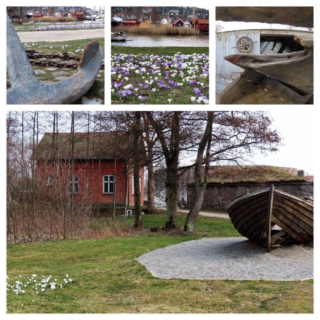 Krokus - de sikreste vårtegn og  Fredrikstads fargepalett - kollasje fra bårliv på Isegran-min