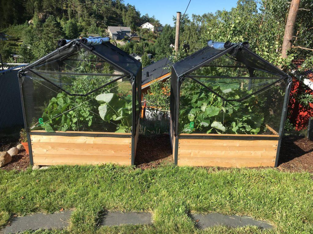 Tips til bruk av tang i hagen - Grønnsakene bugner IMG_0643(1)-min