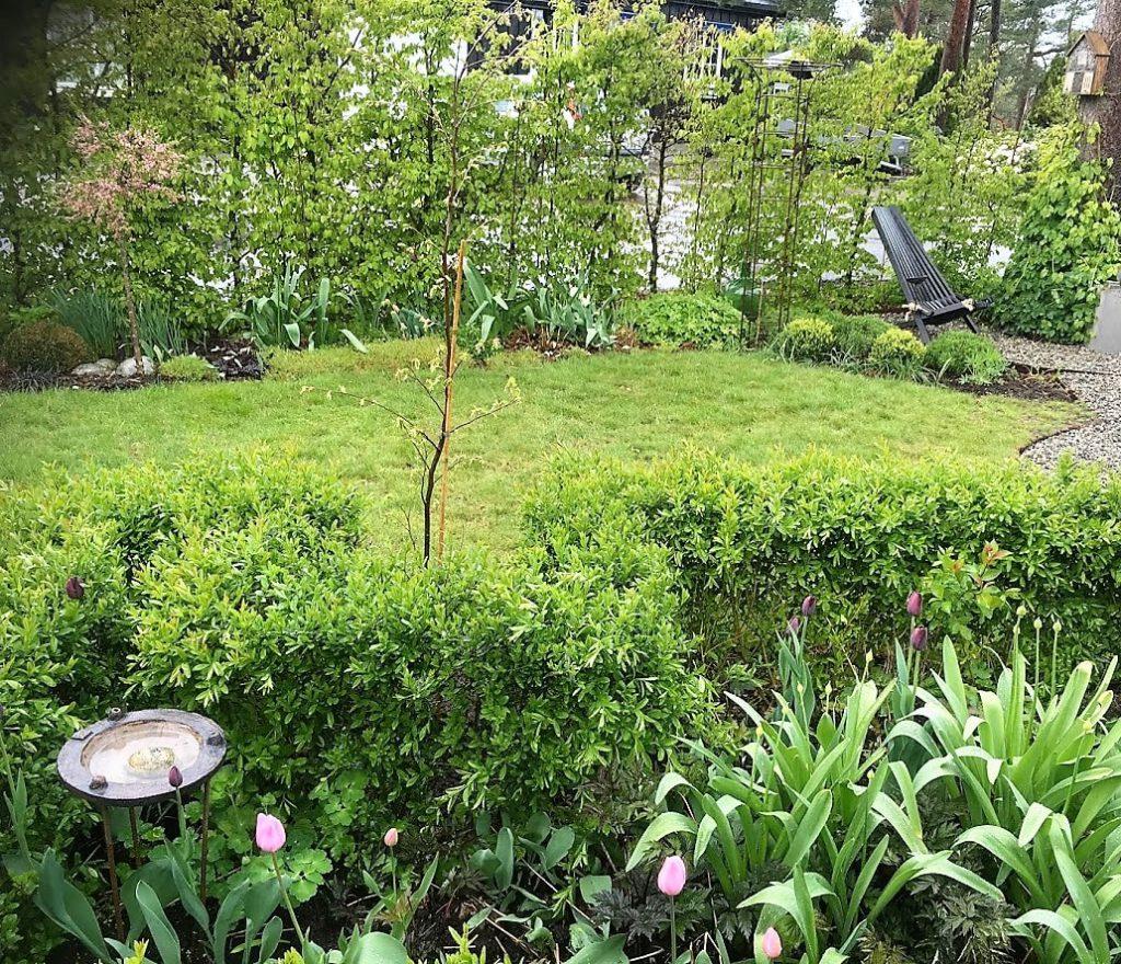 Valget falt på Agnbøkstrær i de rektangulære bedene i hagen - foto 2 IMG_6008 (2)-min
