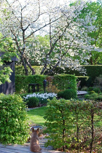 Idag har jeg gleden av å vise deg Marias drøm av en hage - Romdeling i Marias hage