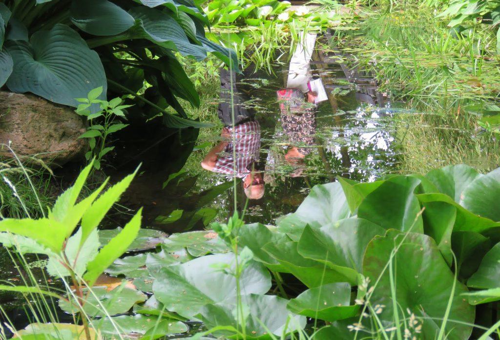Det er flere som nyter et stille vann i Lotties Trädgård. Trädgårdsrundorna i Helsingborg.