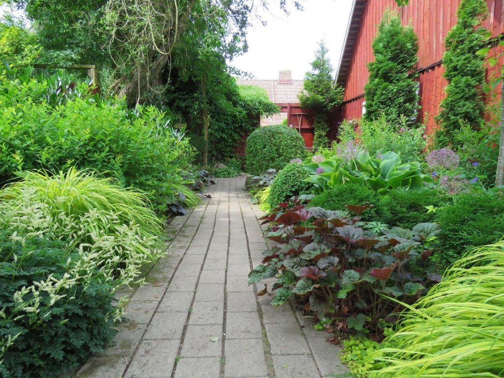 Sti med planter på begge sider i Lotties Trädgård i Helsingborg. Trädgårdsrundorna.