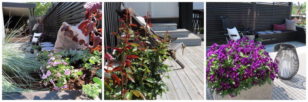 Stilrene uterom med flotte solplasser - Kollasj av blomsterarrangementer