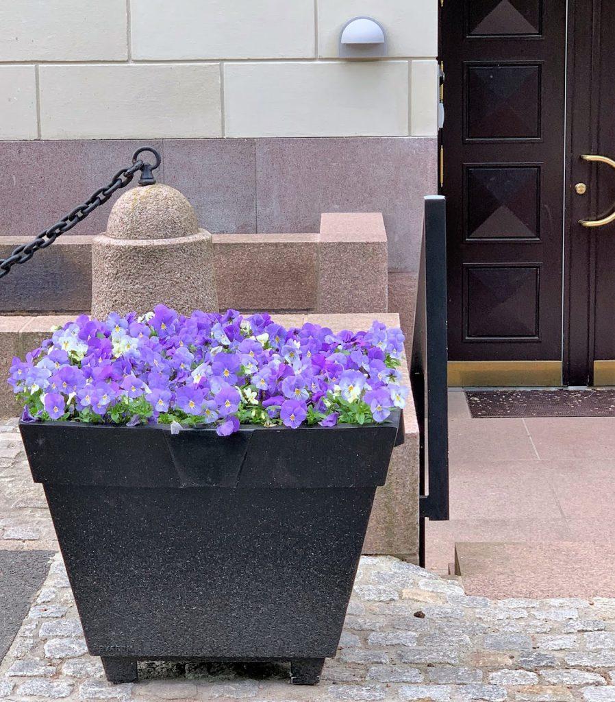 Slottsparken - en oase i hovedstaden vår, Oslo. Blomsterkrukke foran en dør IMG_0256 (2)-min