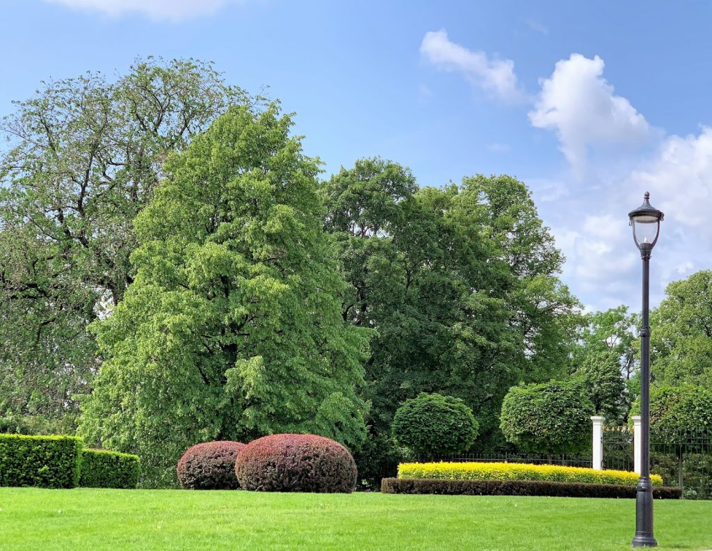 Slottsparken - en oase i hovedstaden vår, Oslo. Struktur, fargesammensetninger i busker og trær IMG_0281 (2)-min