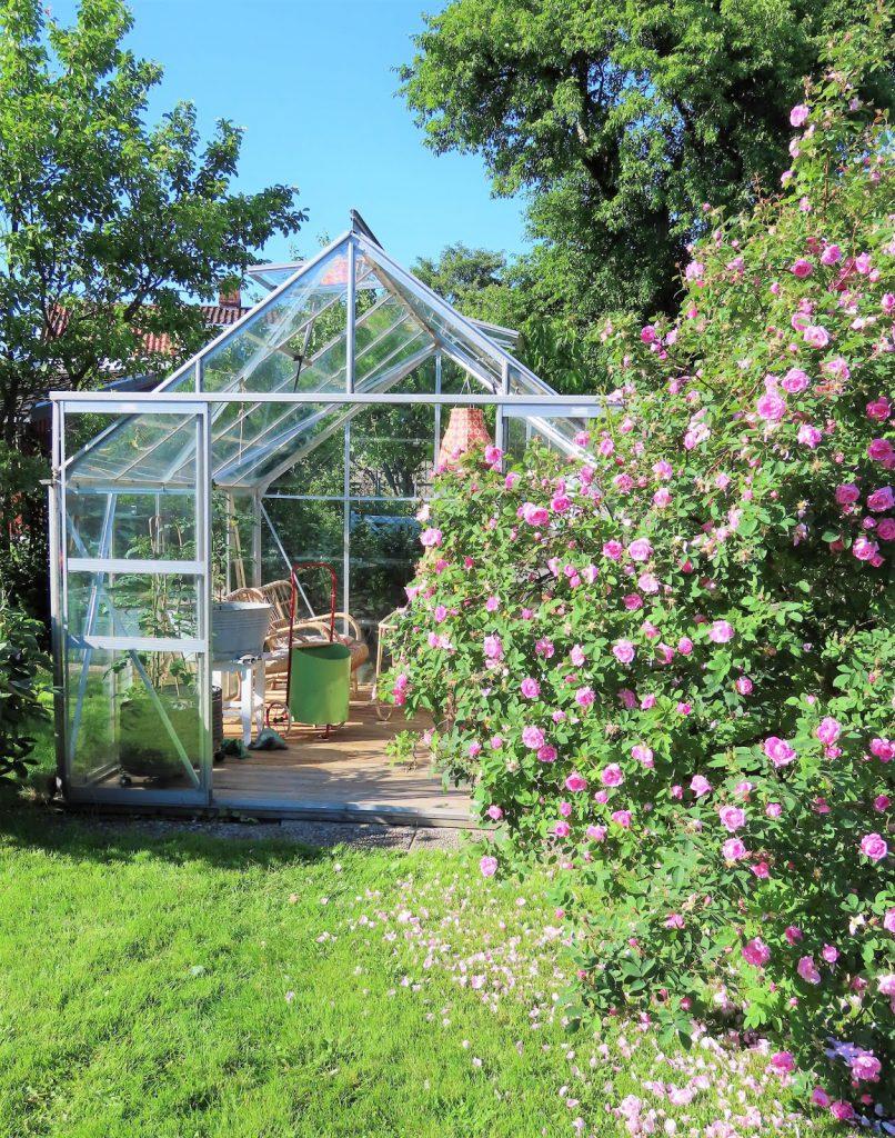 Lev landlig og fruktbart i en hage i Vaterland - drivhus som oppholdsrom IMG_1833 (2)-min