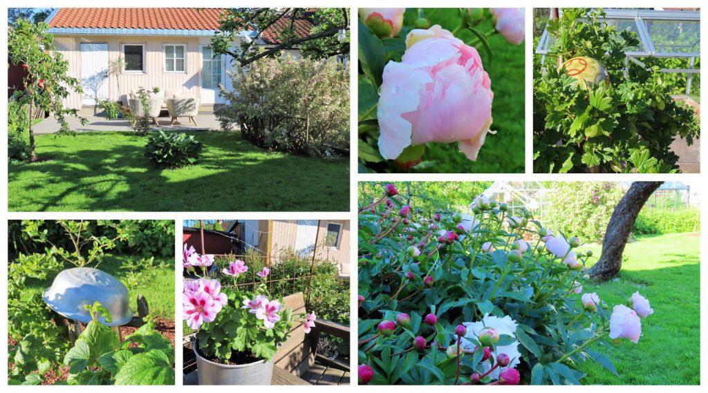 Lev landlig og fruktbart i en hage i Vaterland ved Gamlebyen - kollasj fra hagen