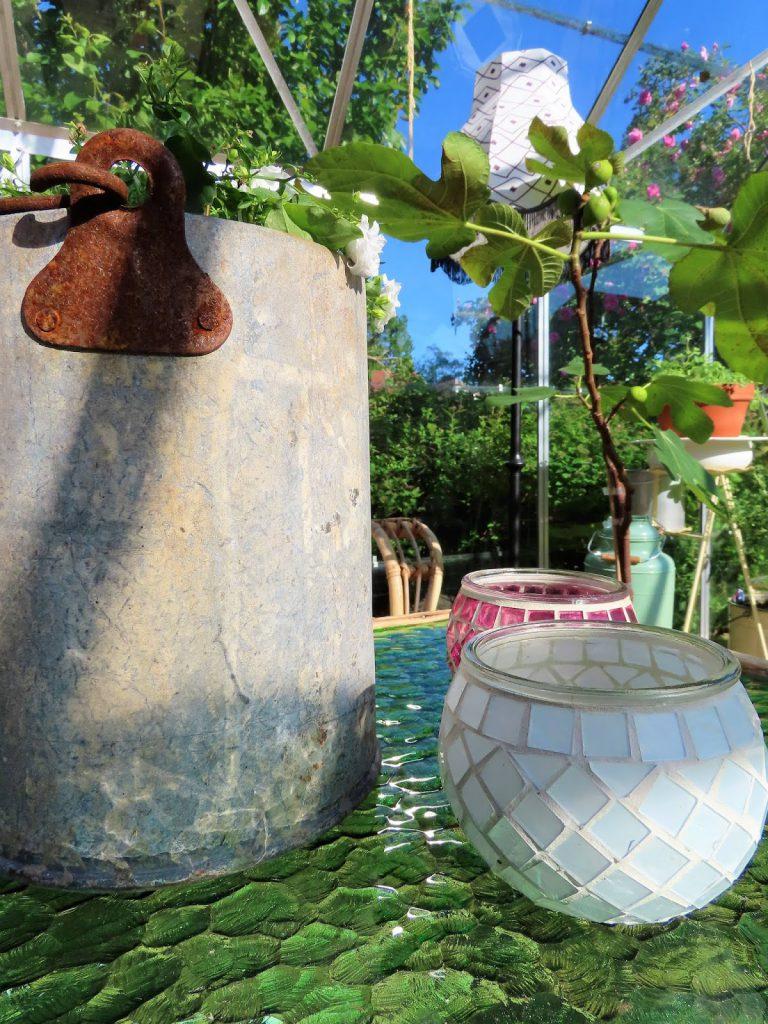 Lev landlig og fruktbart i en hage i Vaterland ved Gamlebyen - stilleben i drivhuset IMG_1840 (2)-min