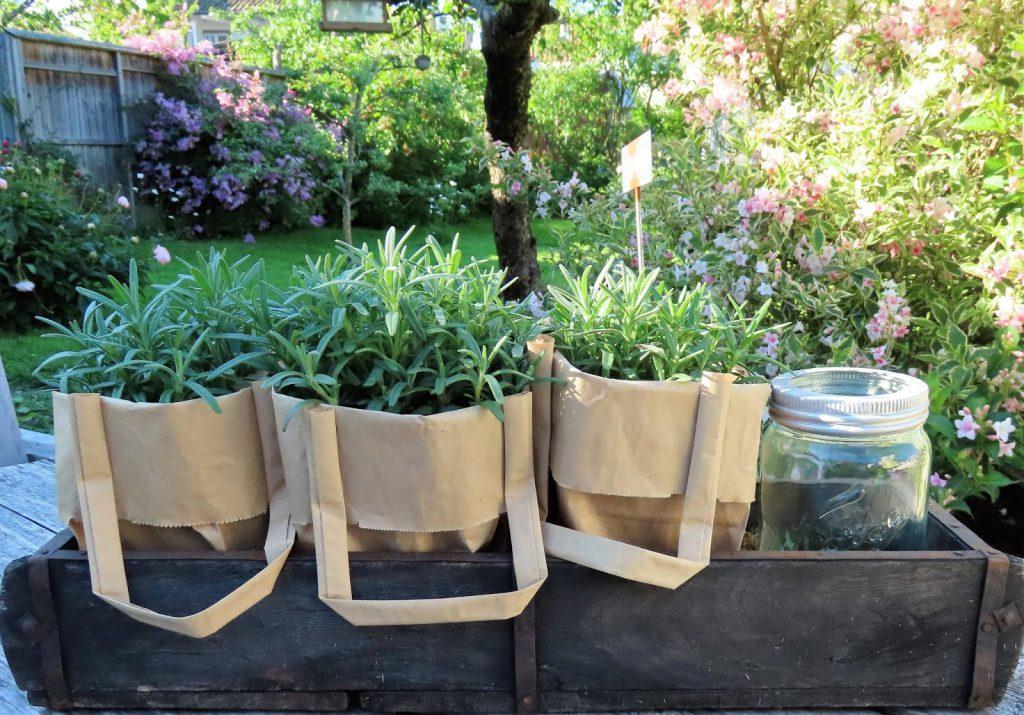 Lev landlig og fruktbart i en hage i Vaterland ved Gamlebyen - urter i papirposer, artig sak IMG_1895 (2)-min (1)