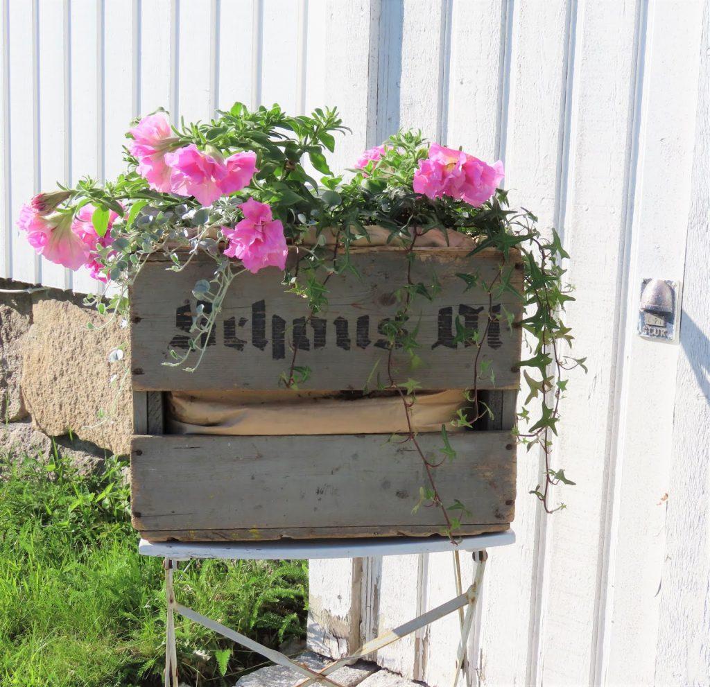 Sommerblomster i trekasse - vintage IMG_1918 (2)-min