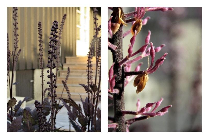 Rektangulært bed gjennom fire årstider - Høstormedrue i knopp og vissen