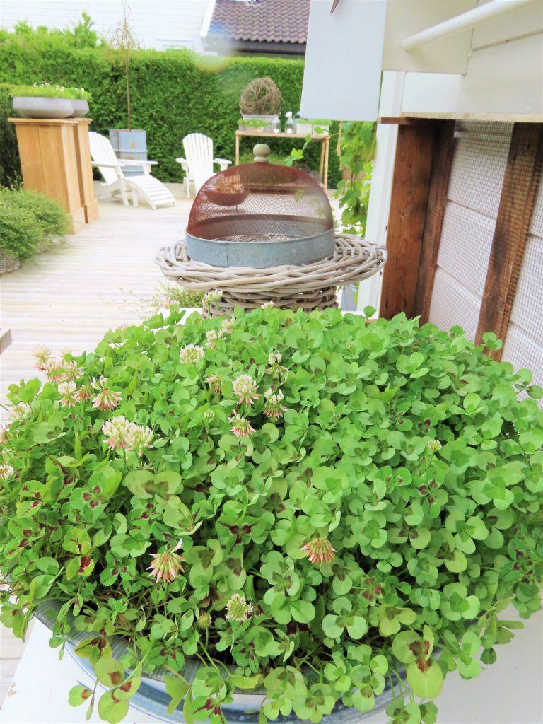nette klarer seg utmerket med å ha terrasse som hage - terrassen sett fra husken IMG_3458 (2)