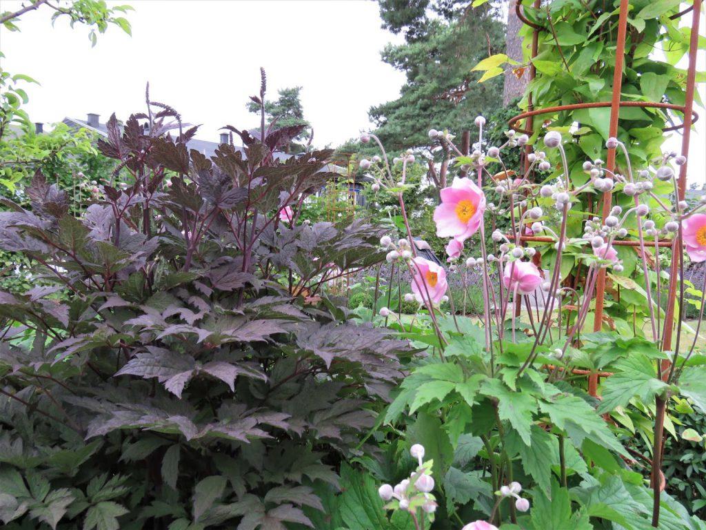 Rektangulært bed gjennom fire årstider - Høstormedrue og Høstanemone