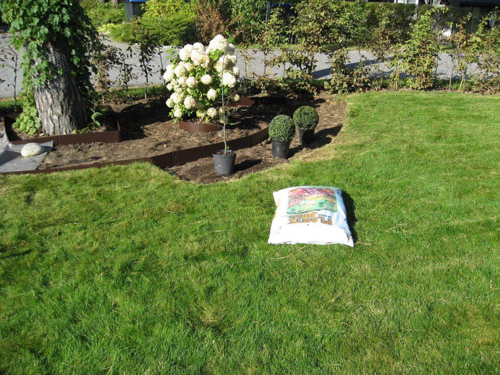 Tips til bruk av bedkanter på uteplassen rundt furua - planter klare til planting. Furulunden