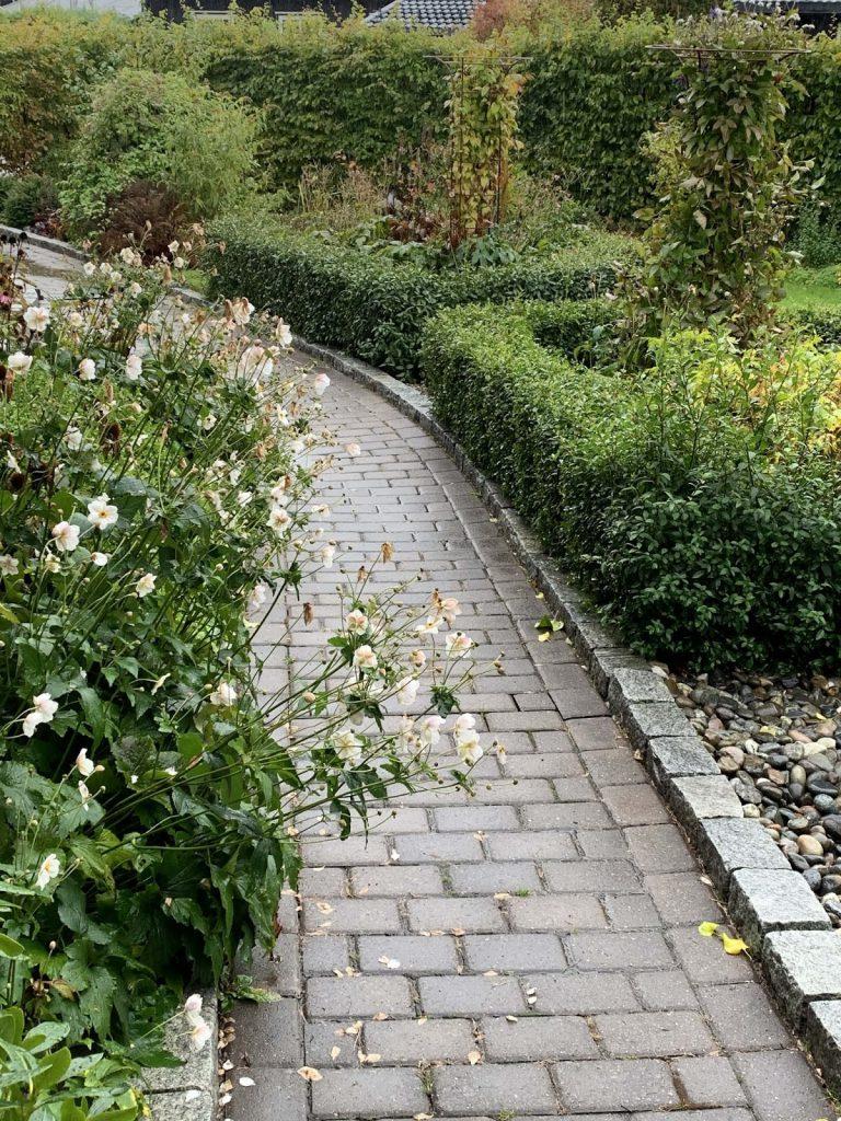 10 ting du kan gjøre i hagen om høsten - Høye planter kan stusses