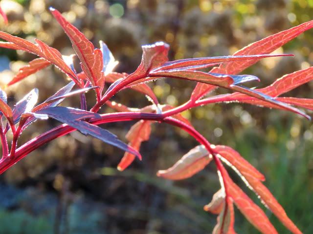 I nærkontakt med høstens Svarthyll - for et fantastisk bladverk