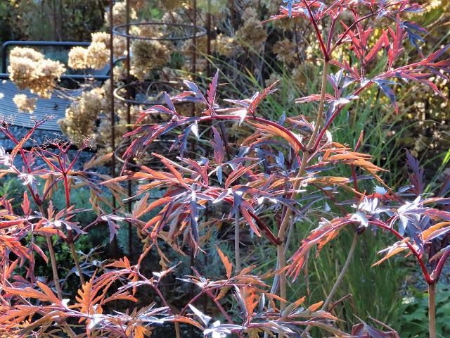 I nærkontakt med høstens Svarthyll - nyter høstens bladverk