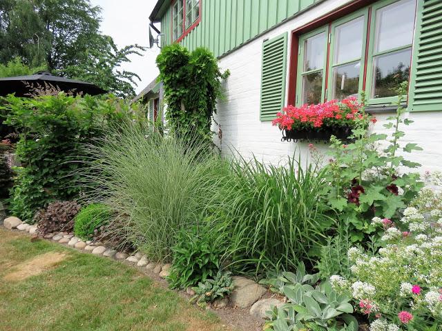 Beplantning inntil husveggen - Trädgårdsrundan