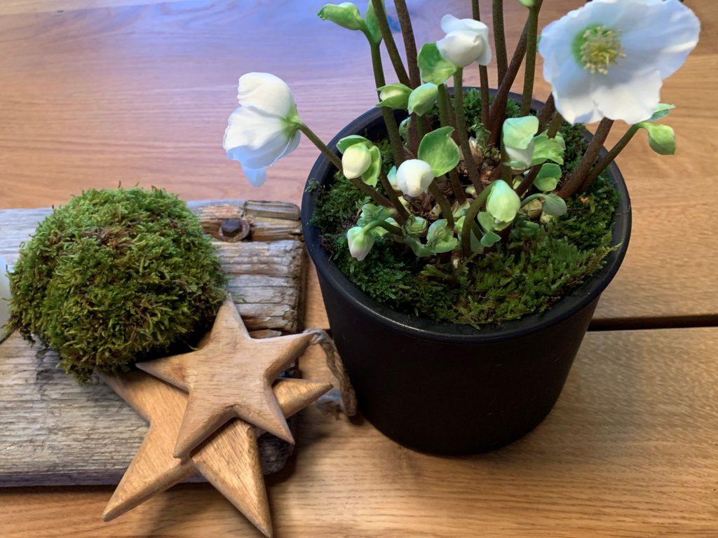 Advent - arrangement med hvite lys og lilla blomst - og en julerose IMG_4611 (2)-min (1)