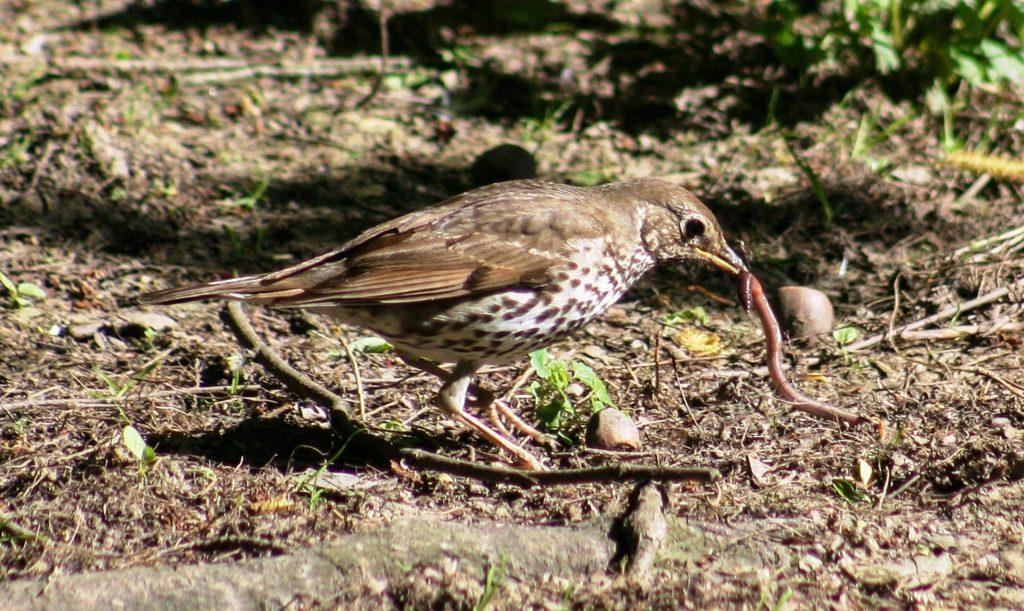 Fuglene er også glad i Meitemarken Foto: Pixabay
