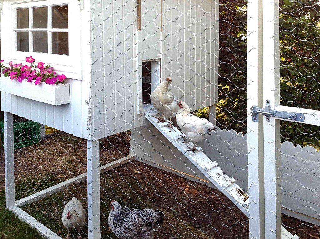 Hønsehus i en hage -min