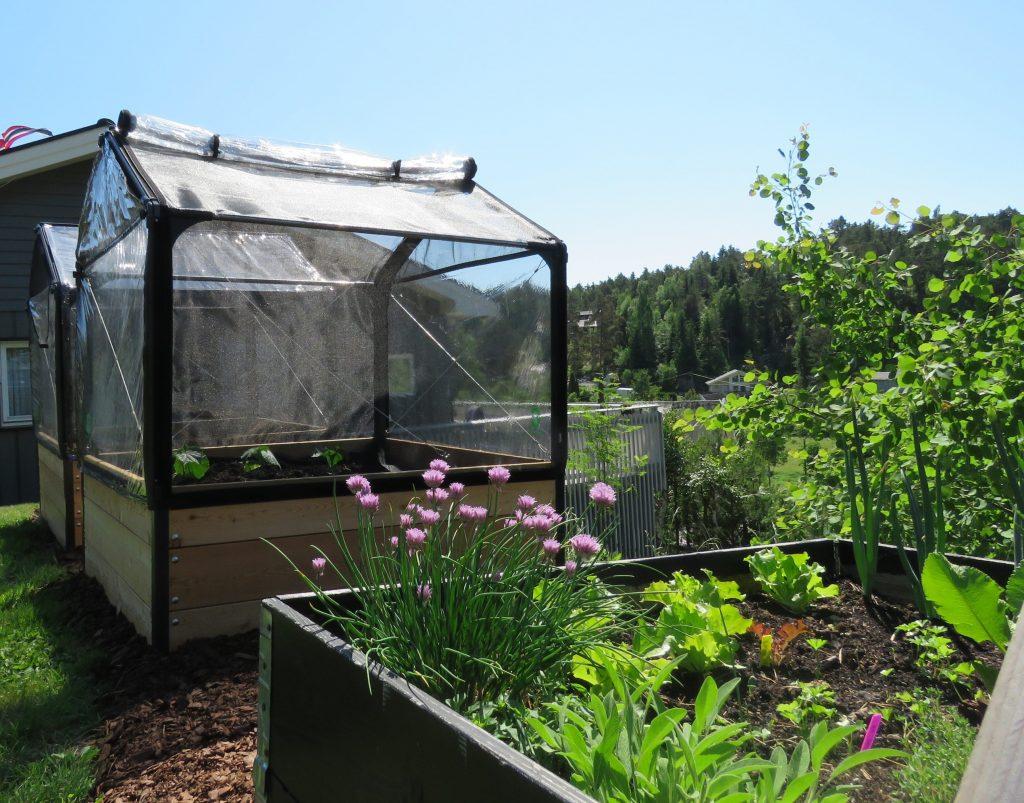 Tips til å lage din egen hage - opphøyde bed