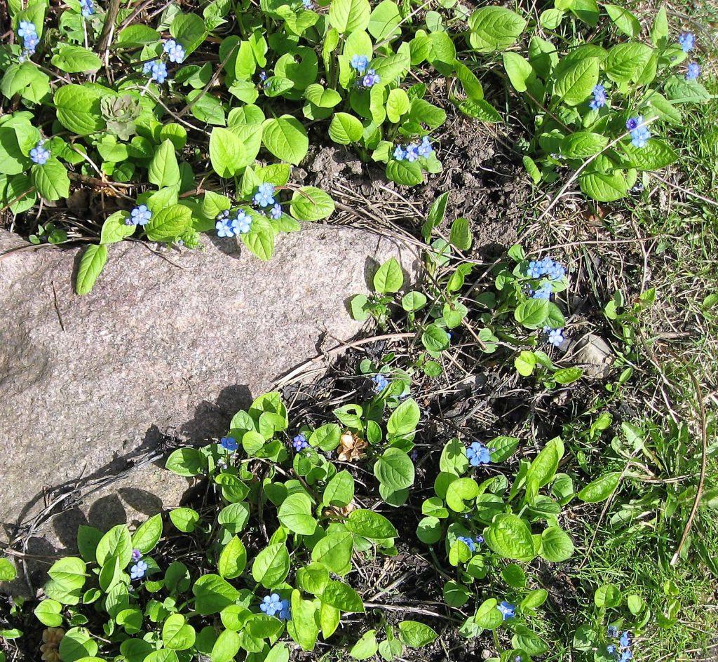 Tips til bunndekkere i hagen - Vårkjærminne